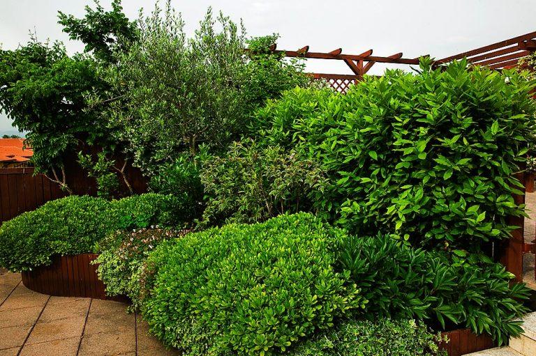 Giardino Aziendale 08